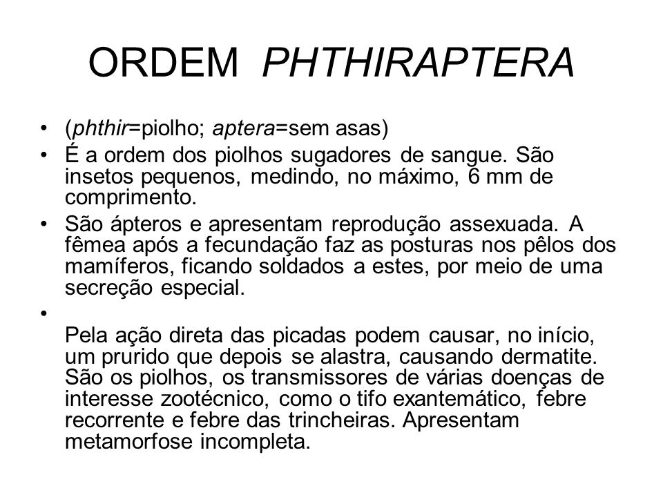 ORDEM PHTHIRAPTERA (phthir=piolho; aptera=sem asas)