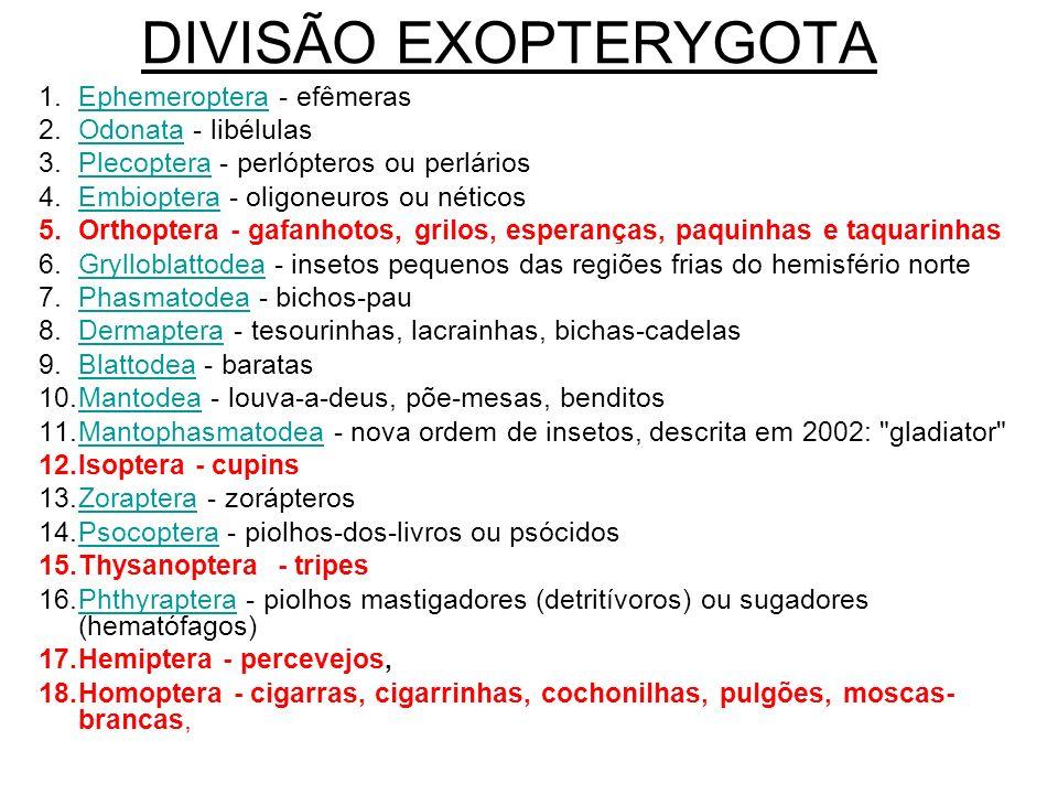 DIVISÃO EXOPTERYGOTA Ephemeroptera - efêmeras Odonata - libélulas