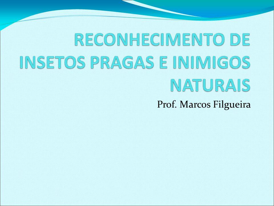 Prof. Marcos Filgueira