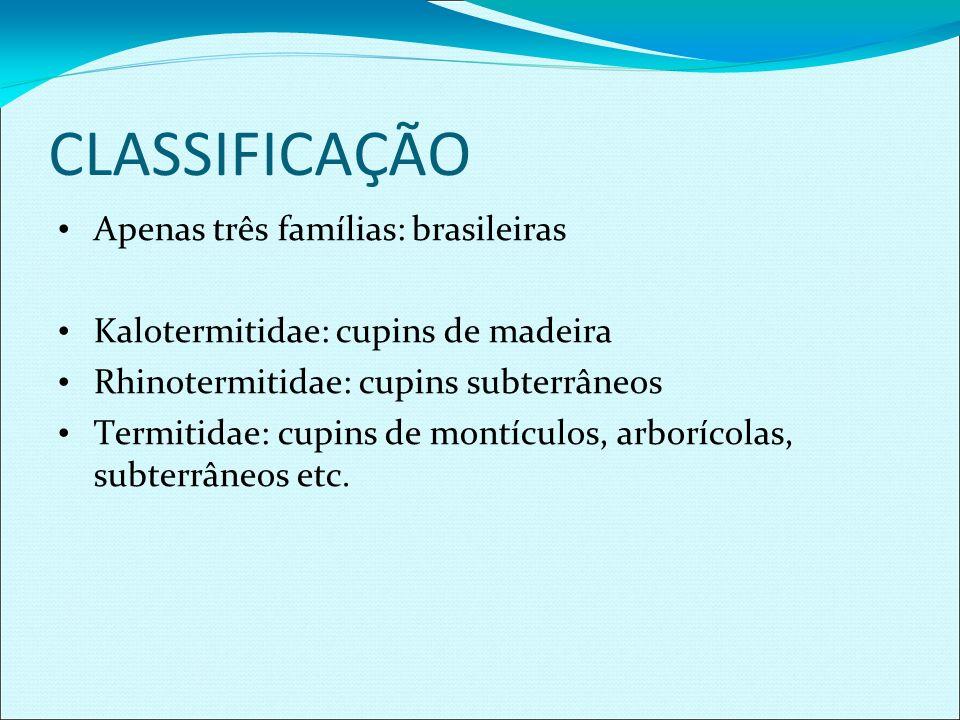 CLASSIFICAÇÃO Apenas três famílias: brasileiras