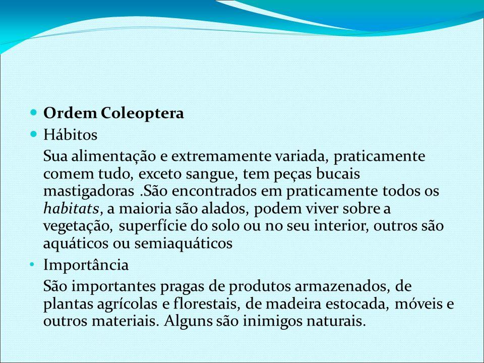 Ordem Coleoptera Hábitos.