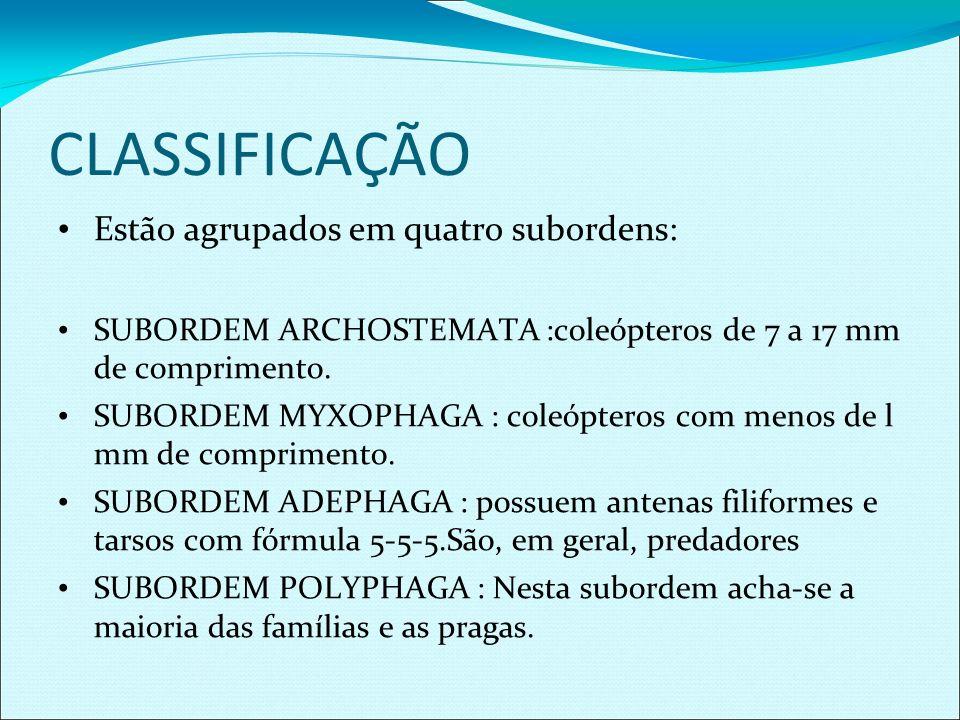 CLASSIFICAÇÃO Estão agrupados em quatro subordens: