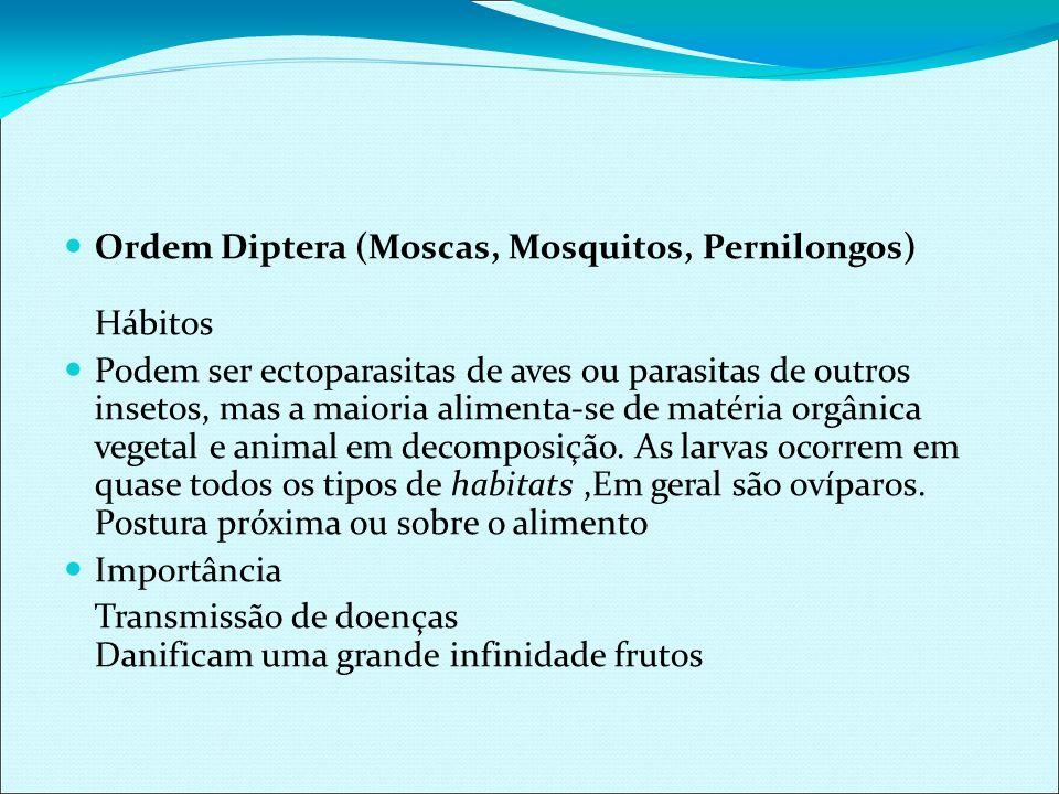 Ordem Diptera (Moscas, Mosquitos, Pernilongos) Hábitos