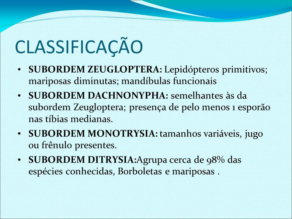 CLASSIFICAÇÃO SUBORDEM ZEUGLOPTERA: Lepidópteros primitivos; mariposas diminutas; mandíbulas funcionais.