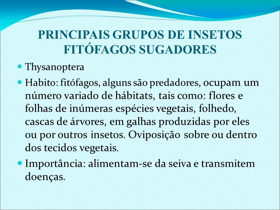 PRINCIPAIS GRUPOS DE INSETOS FITÓFAGOS SUGADORES