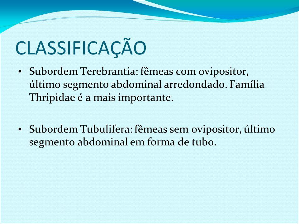 CLASSIFICAÇÃO Subordem Terebrantia: fêmeas com ovipositor, último segmento abdominal arredondado. Família Thripidae é a mais importante.