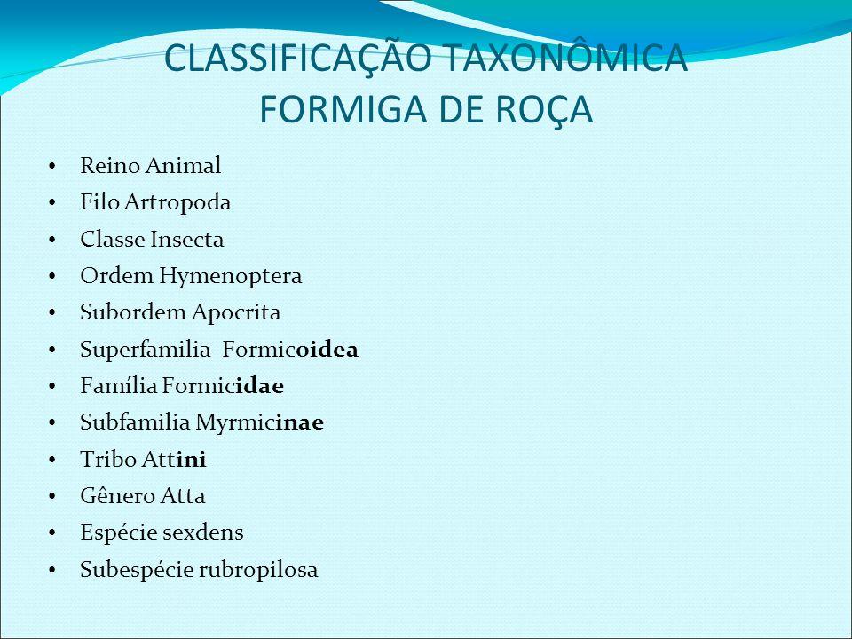 CLASSIFICAÇÃO TAXONÔMICA FORMIGA DE ROÇA