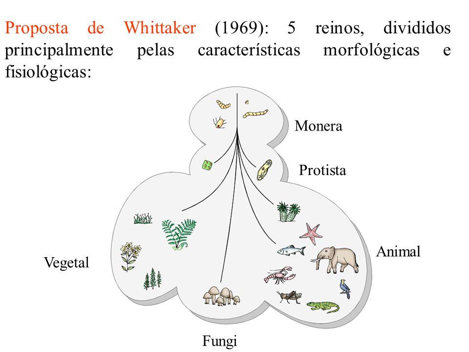 Proposta de Whittaker (1969): 5 reinos, divididos principalmente pelas características morfológicas e fisiológicas: