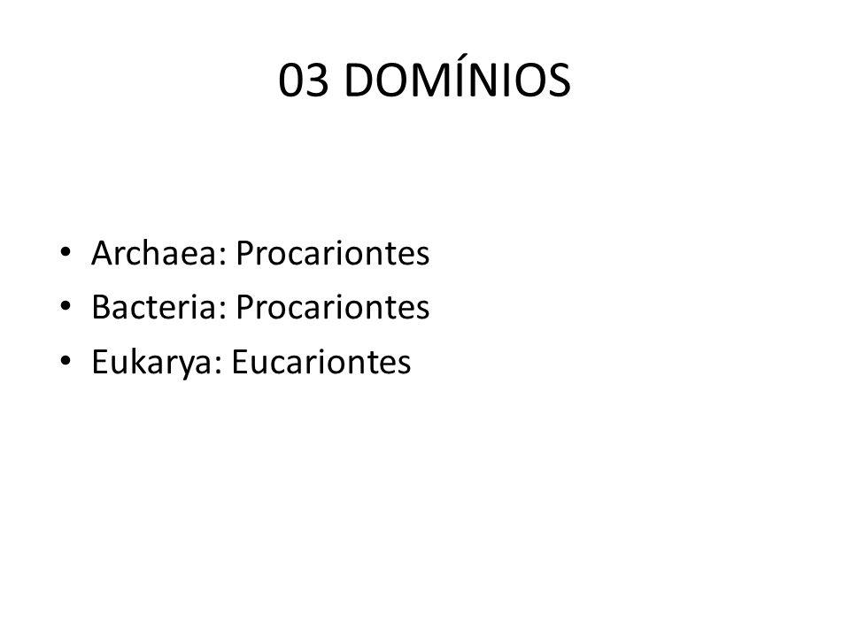 03 DOMÍNIOS Archaea: Procariontes Bacteria: Procariontes