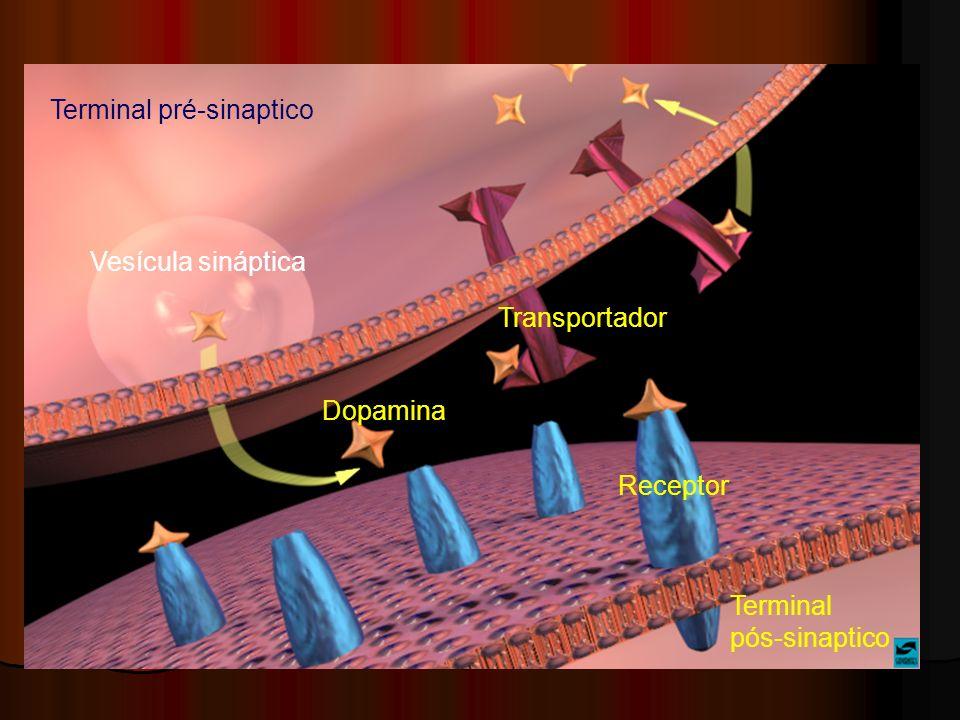 Terminal pré-sinaptico