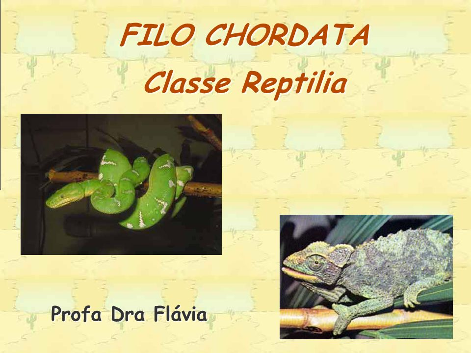 FILO CHORDATA Classe Reptilia