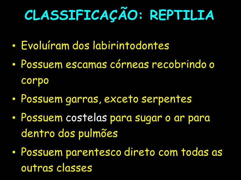 CLASSIFICAÇÃO: REPTILIA
