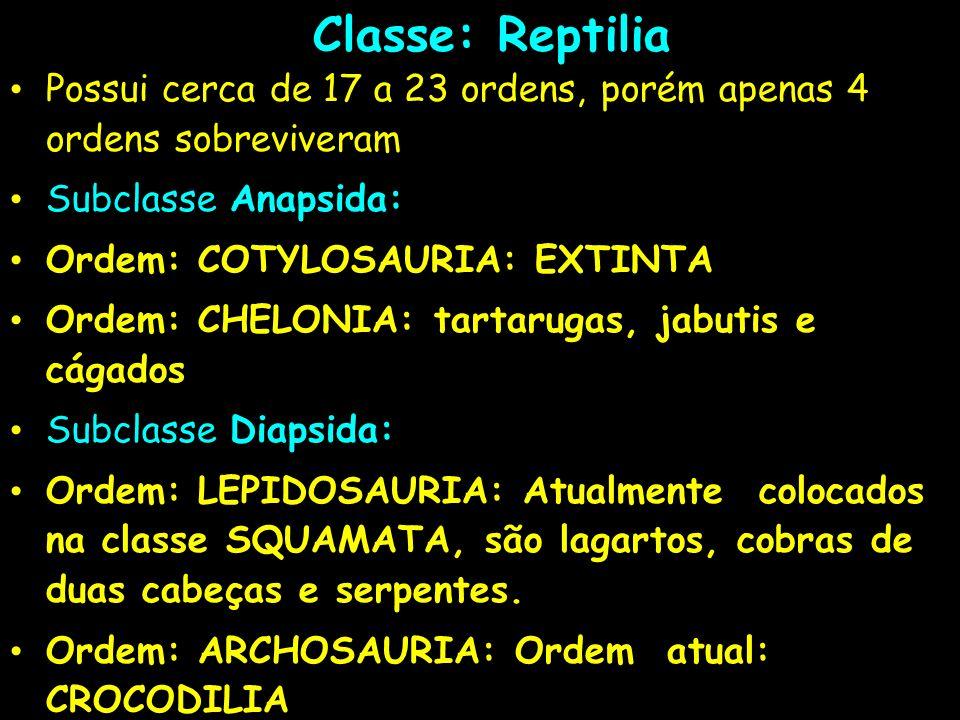 Classe: Reptilia Possui cerca de 17 a 23 ordens, porém apenas 4 ordens sobreviveram. Subclasse Anapsida: