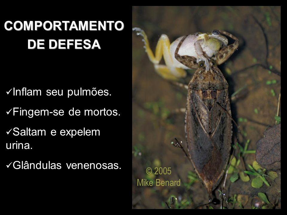 COMPORTAMENTO DE DEFESA