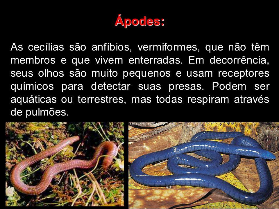 Ápodes:
