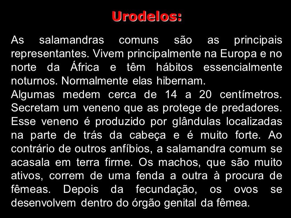 Urodelos: