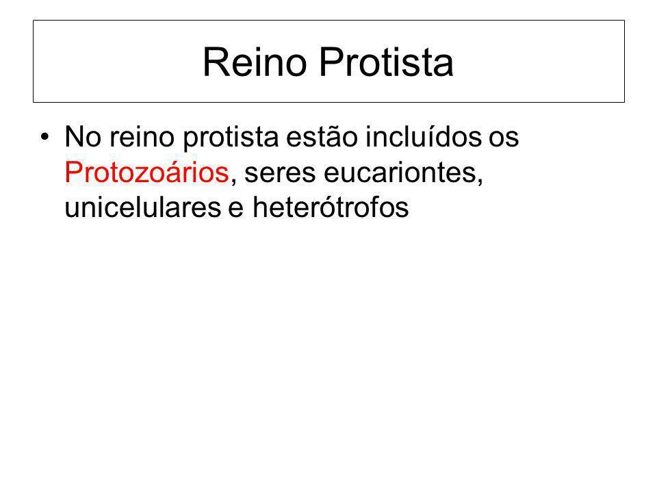 Reino Protista No reino protista estão incluídos os Protozoários, seres eucariontes, unicelulares e heterótrofos.