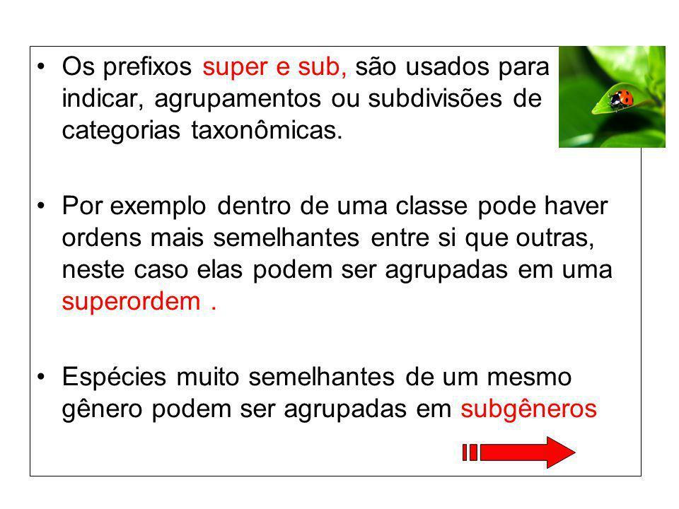 Os prefixos super e sub, são usados para indicar, agrupamentos ou subdivisões de categorias taxonômicas.