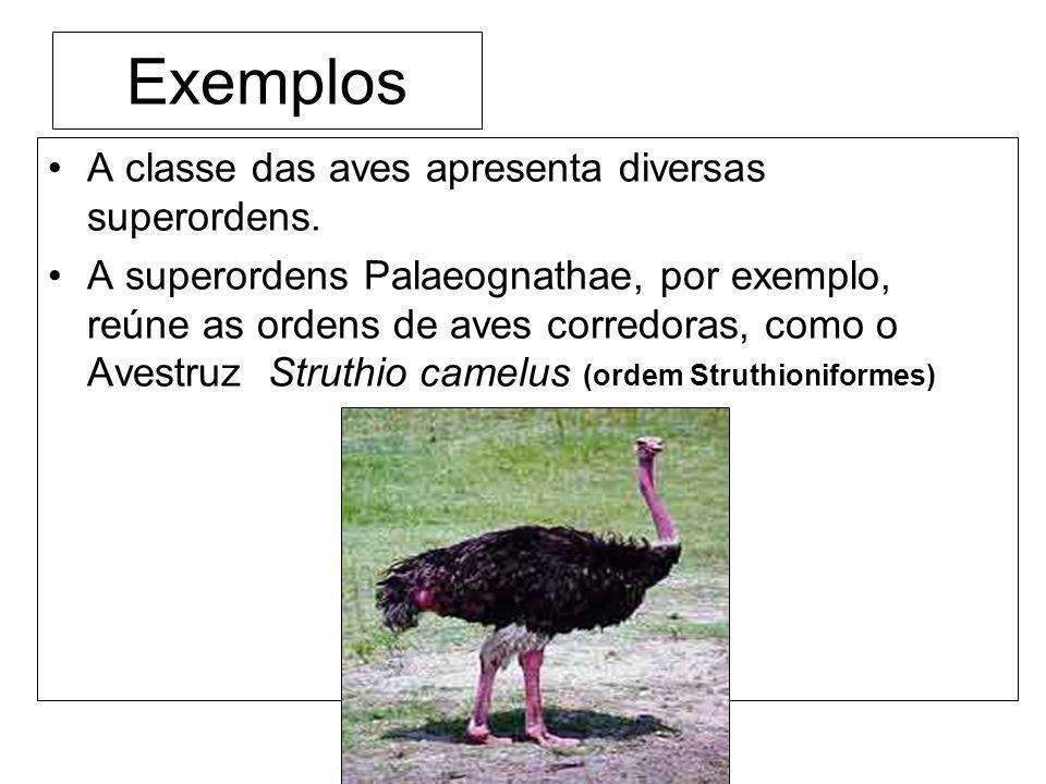 Exemplos A classe das aves apresenta diversas superordens.