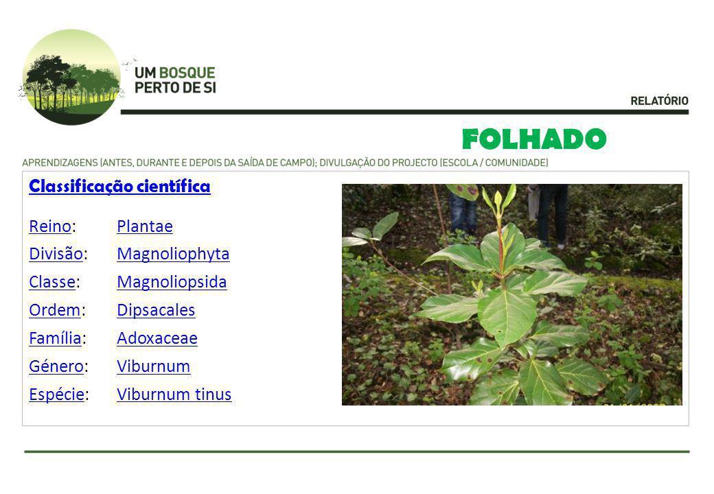 FOLHADO Classificação científica Reino: Plantae Divisão: Magnoliophyta