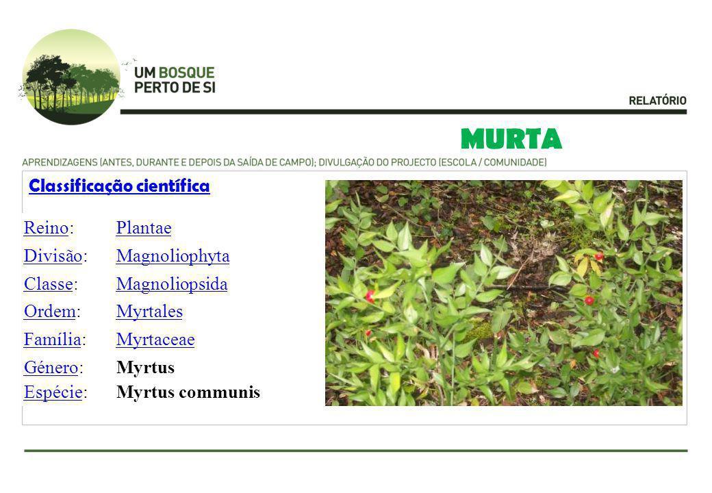 MURTA Classificação científica Reino: Plantae Divisão: Magnoliophyta