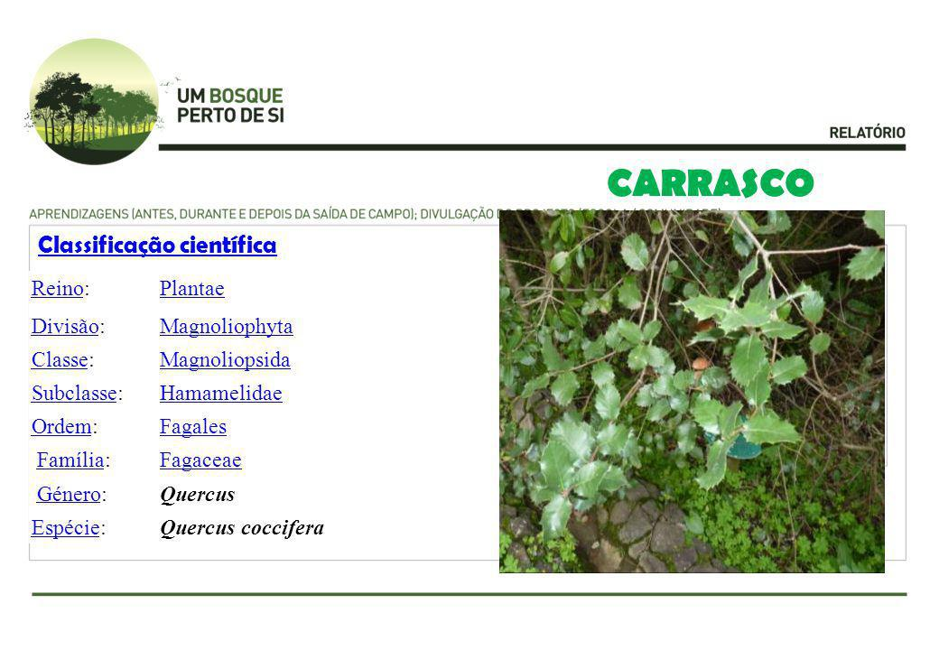 CARRASCO Classificação científica Reino: Plantae Divisão: