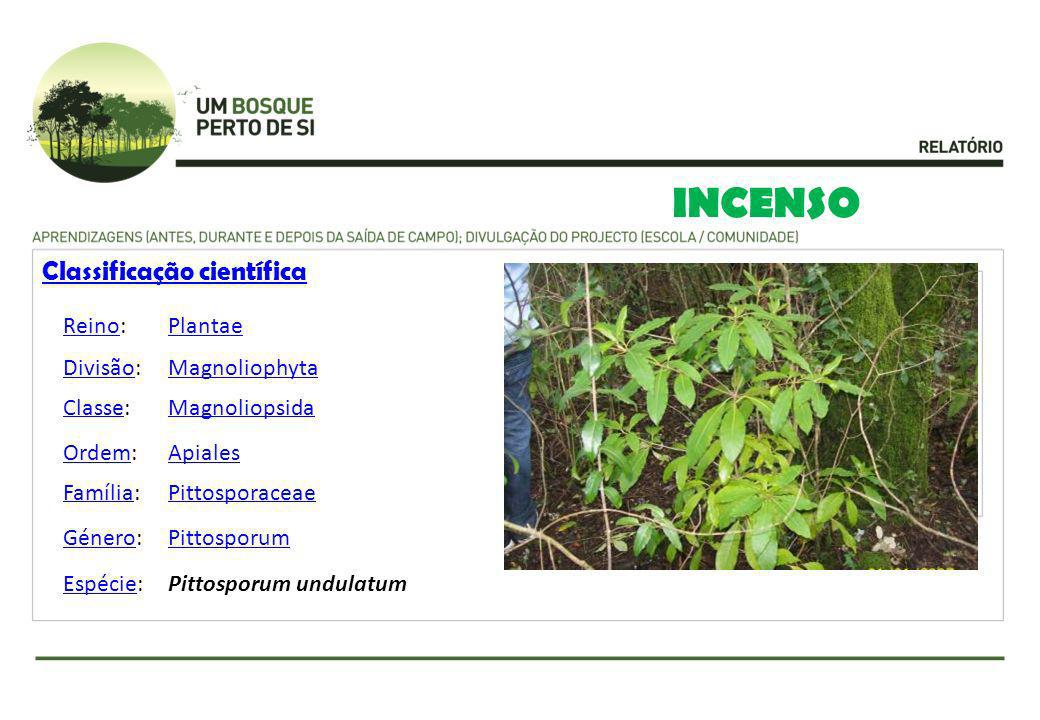 INCENSO Classificação científica Reino: Plantae Divisão: Magnoliophyta