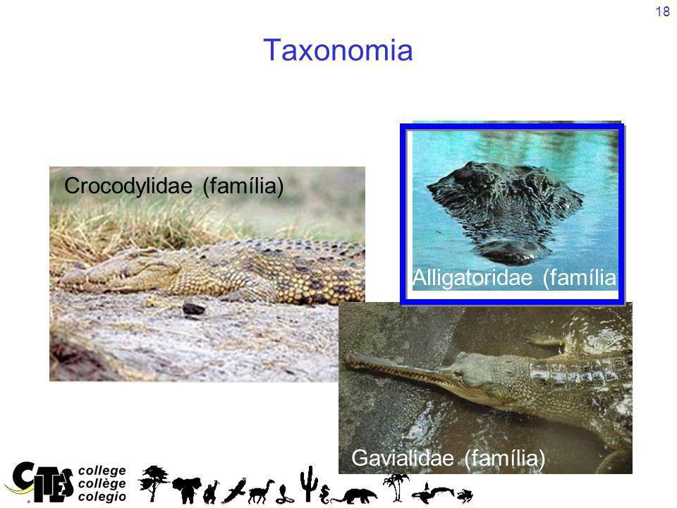 Crocodylidae (família)
