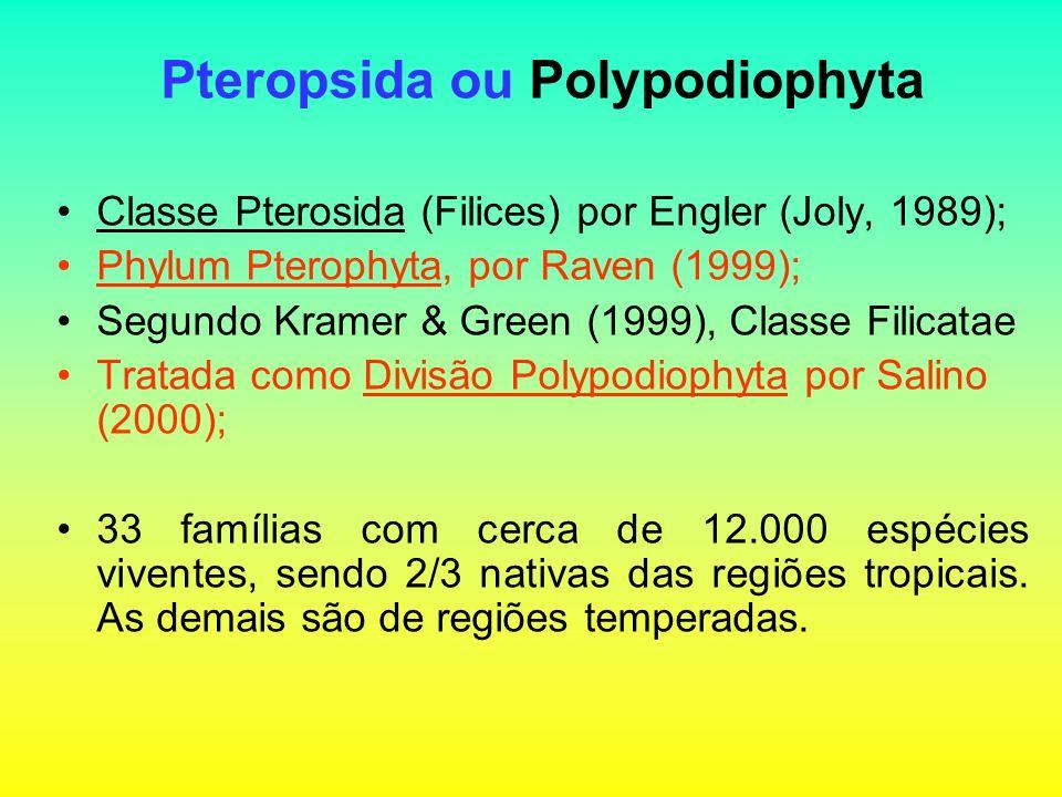 Pteropsida ou Polypodiophyta