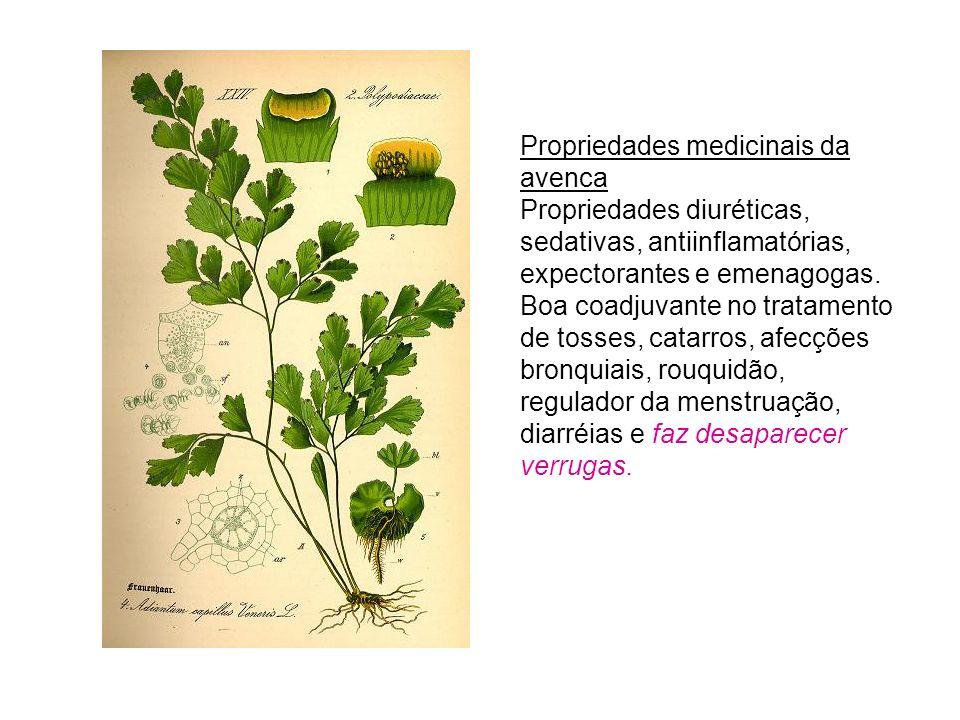 Propriedades medicinais da avenca Propriedades diuréticas, sedativas, antiinflamatórias, expectorantes e emenagogas.