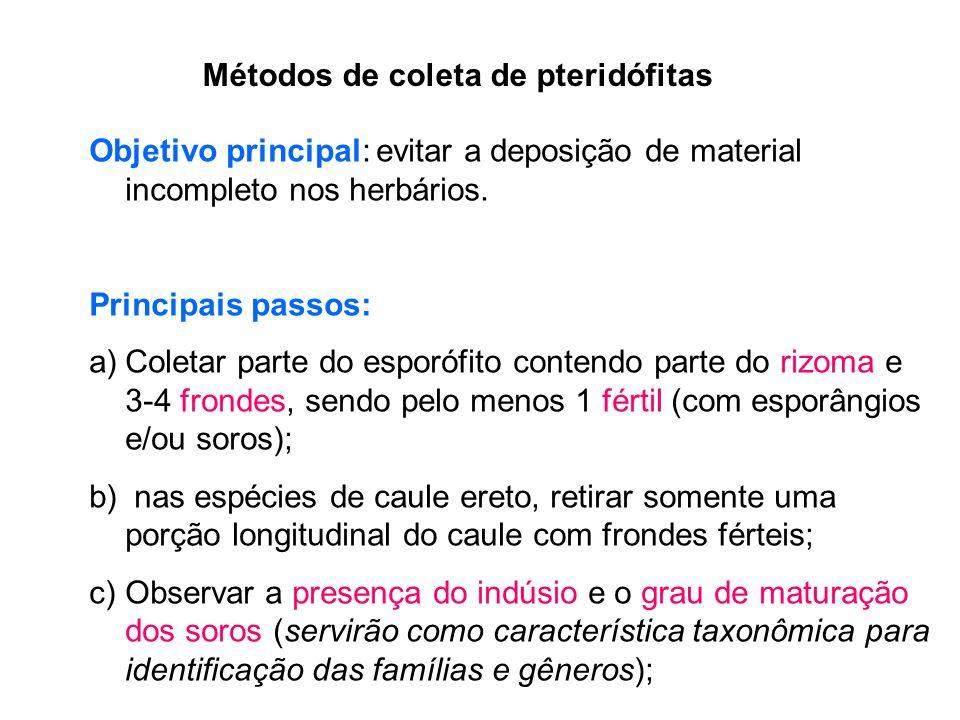 Métodos de coleta de pteridófitas