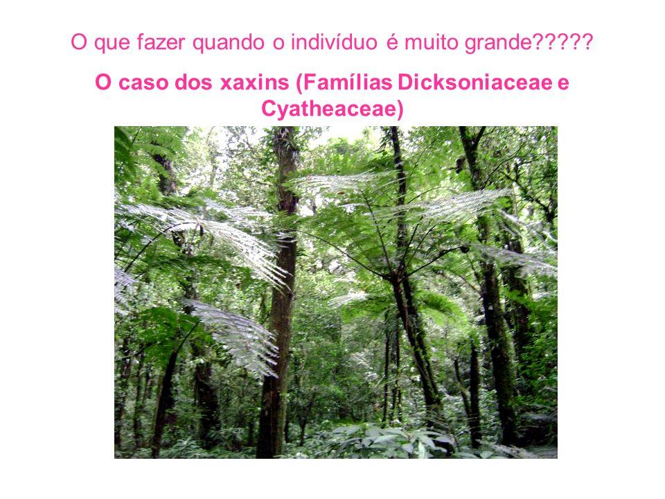 O caso dos xaxins (Famílias Dicksoniaceae e Cyatheaceae)