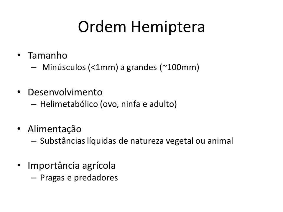Ordem Hemiptera Tamanho Desenvolvimento Alimentação