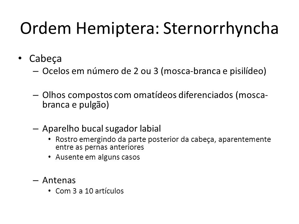 Ordem Hemiptera: Sternorrhyncha