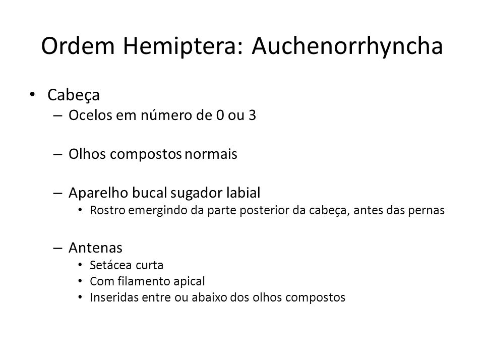 Ordem Hemiptera: Auchenorrhyncha