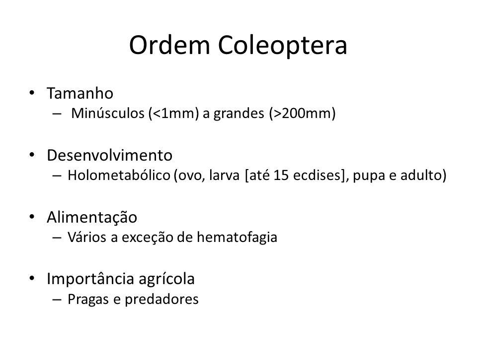 Ordem Coleoptera Tamanho Desenvolvimento Alimentação