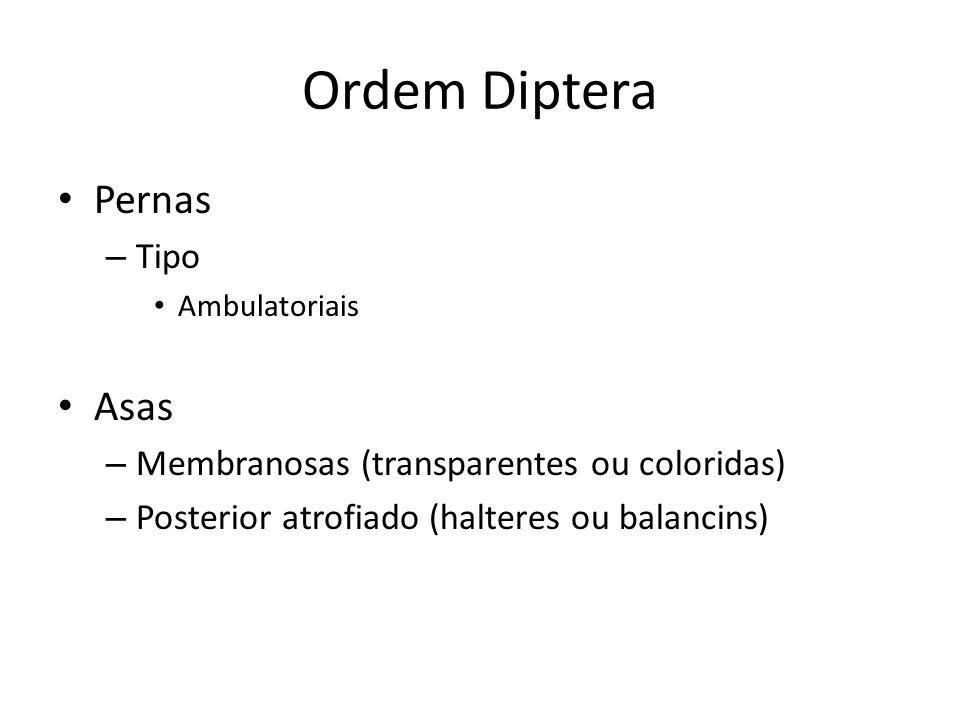 Ordem Diptera Pernas Asas Tipo