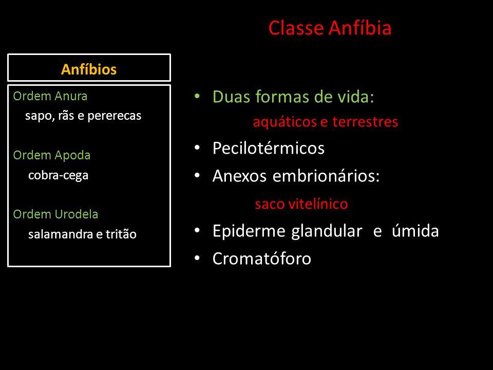 Classe Anfíbia Duas formas de vida: Pecilotérmicos