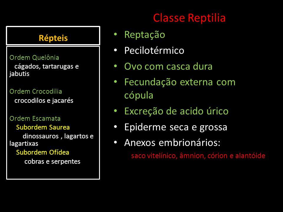 Classe Reptilia Reptação Pecilotérmico Ovo com casca dura