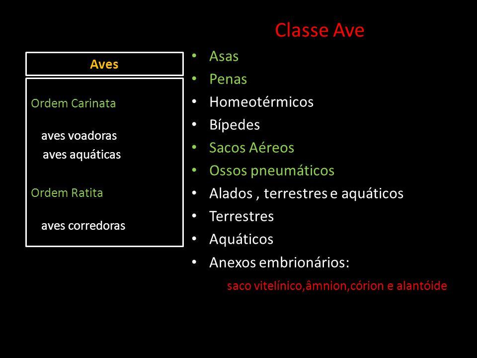 Classe Ave Asas Penas Homeotérmicos Bípedes Sacos Aéreos