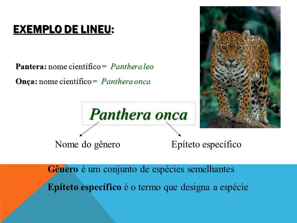 Panthera onca Exemplo de Lineu: Nome do gênero Epíteto específico