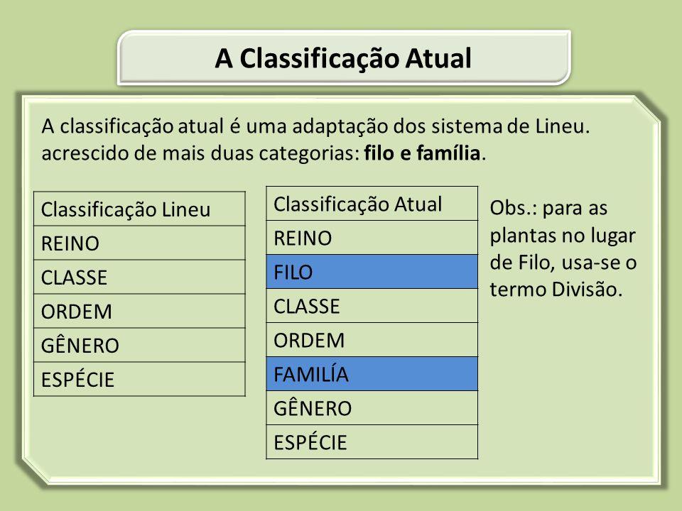 A Classificação Atual Classificação Atual Classificação Lineu