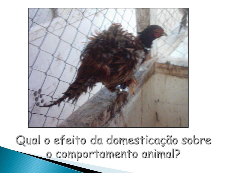 Qual o efeito da domesticação sobre o comportamento animal
