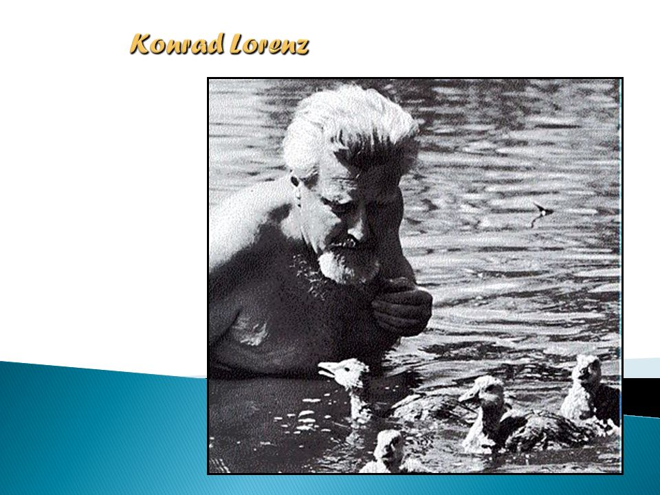 Konrad Lorenz Konrad Lorenz autobiography (1903-1989, austríaco)