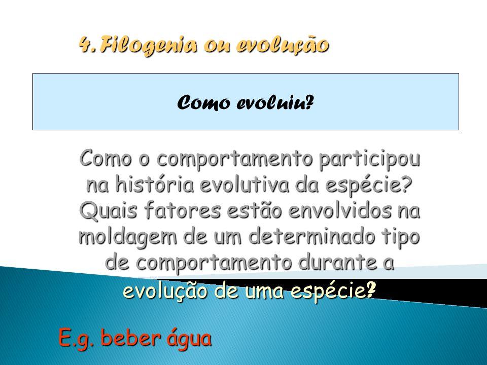 4. Filogenia ou evolução Como evoluiu
