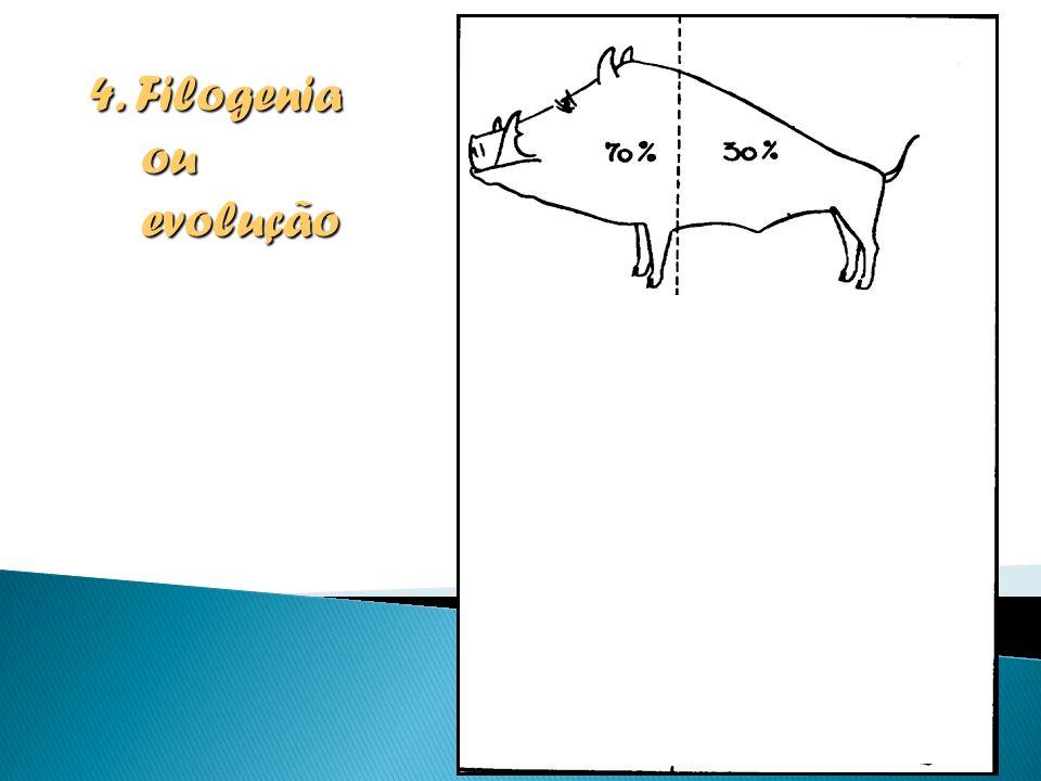 4. Filogenia ou evolução