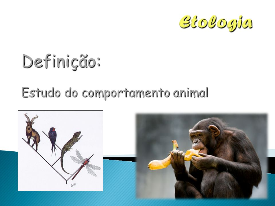 Etologia Definição: Estudo do comportamento animal