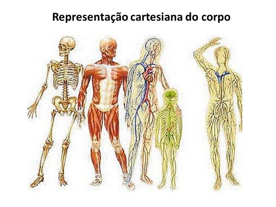 Representação cartesiana do corpo
