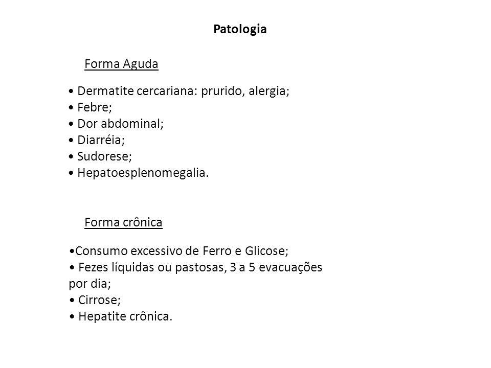 Patologia Forma Aguda. Dermatite cercariana: prurido, alergia; Febre; Dor abdominal; Diarréia; Sudorese;