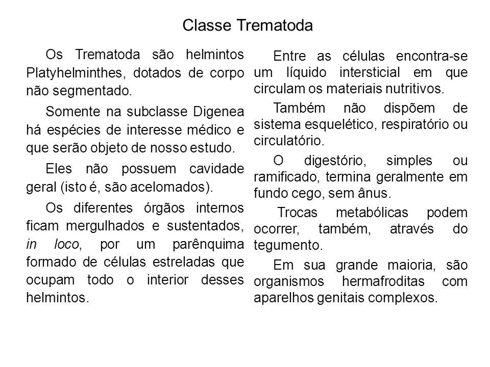 Classe Trematoda Os Trematoda são helmintos Platyhelminthes, dotados de corpo não segmentado.